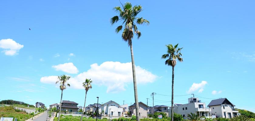 葉山・横須賀西地区